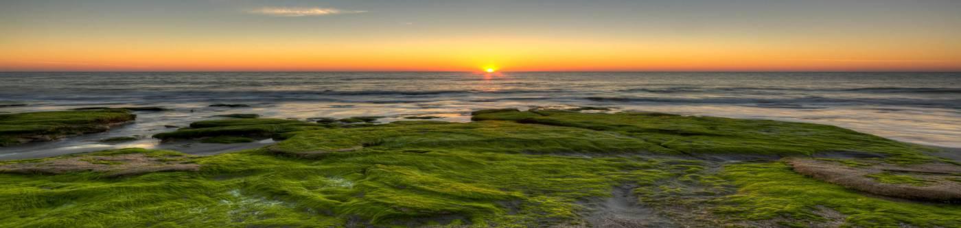 coquina rocks kure beach